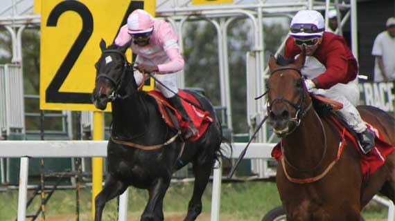HORSE RACING: Lesley jockeys Compadre to victory
